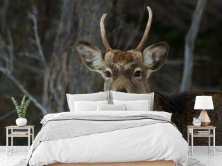 lovely deer in a snowy forest