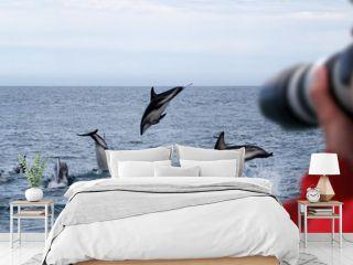 Dusky Dolphins New Zealand