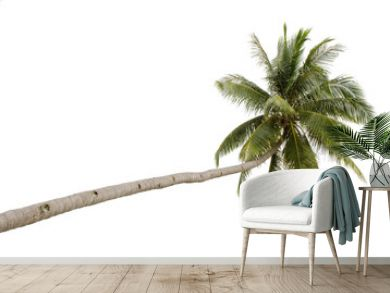 Palm tree isolated on white background..