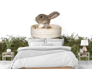 Adorable Bunny in Panter on White Background
