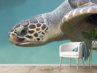 animal - loggerhead sea turtle (caretta caretta)