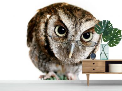 wise owl wearing reading glasses