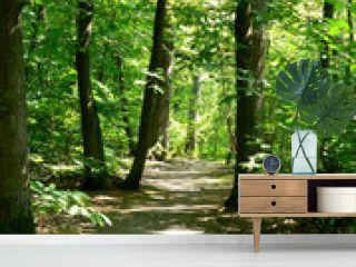 forêt - forest