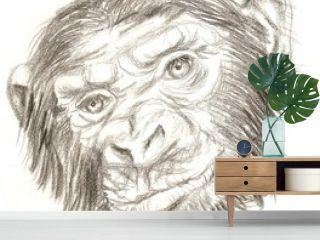 Black and white sketch of a gorilla monkey