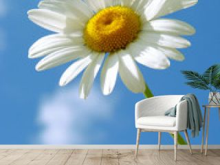 daisy against blue sky