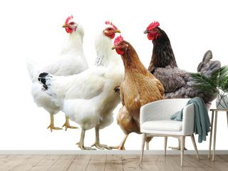 cute funny hens on white background, isolated