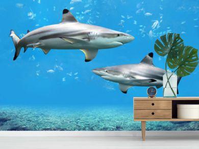 Blacktip Reef Sharks Swimming in Tropical Waters
