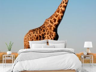 Giraffe im Masai Mara
