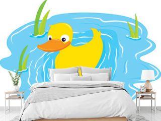a swiming duck