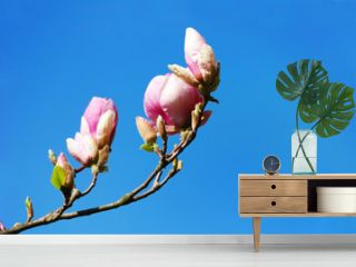 Flowering magnolia tree branches