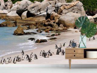 Südafrika - Pinguin