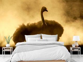 Ostrich taking a dust bath, Kalahari, South Africa