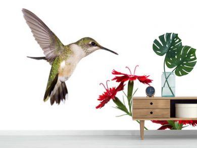 hummingbird and three dianthus