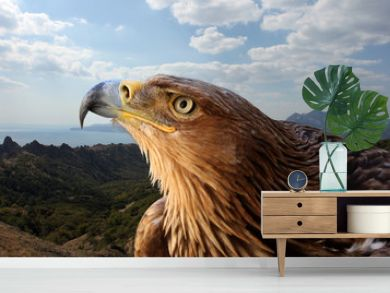 golden eagle over mountanious landscape