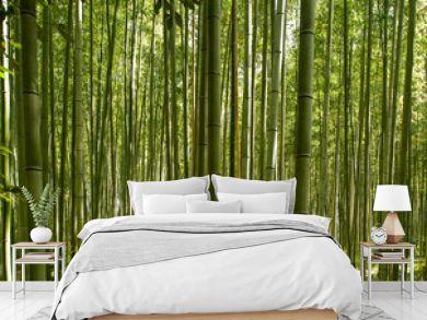 A beautiful bamboo grove in Kyoto, Japan
