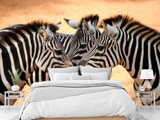 Three Zebras Kissing