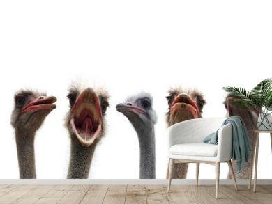 five ostrich heads