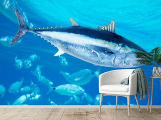 Bluefin tuna Thunnus thynnus saltwater fish