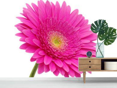 gerbera flower
