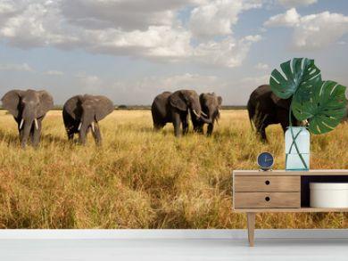 Elephant Herd on the Move: Walking toward the camera