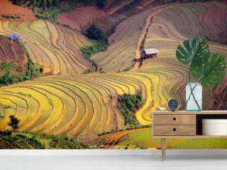 rice field on terraced. Terraced rice fields in Vietnam