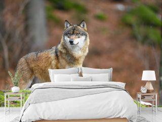 Wolf mit Knochen