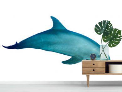 Bottlenose Dolphin isolated on white background