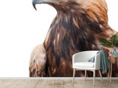 Proud Caucasian eagle