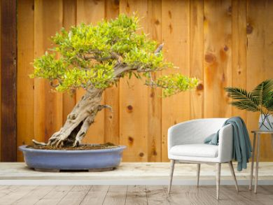 Pomegranate Bonsai Tree Against Wood Fence