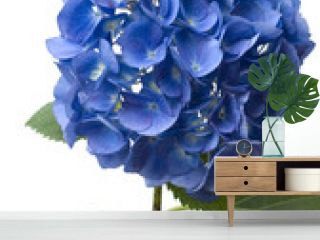 Hortensie, Hydrangea macrophylla