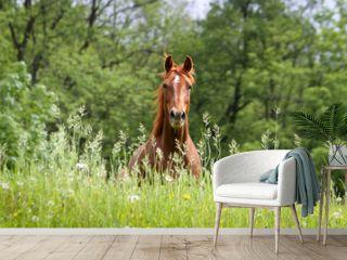 Pferd auf Wiese