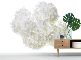 White flower hydrangea isolated on white