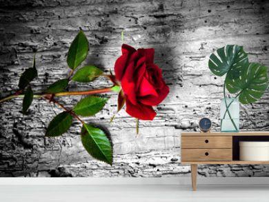 rosa rossa su fondo b/n