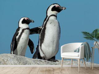 African penguins against a blue sky