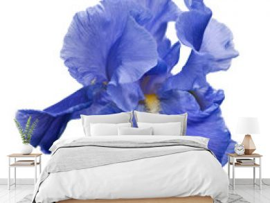 blue iris and little spider isolated on white