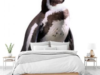 penguin. Isolated on white