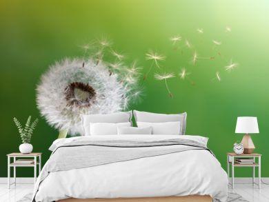 Dandelion clock in morning sun