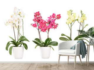 Three blooming orchids in pots