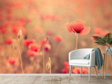 Artistic poppy closeup in the sunshine