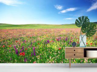 Spring flower meadow