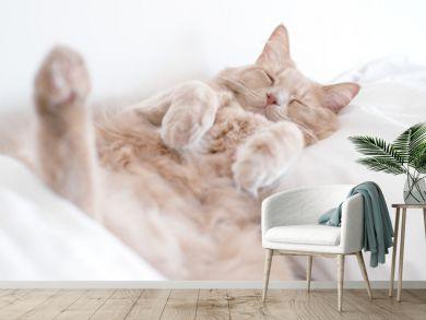 Cat in Deep sleep