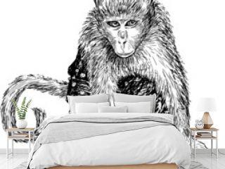 monkey in pants