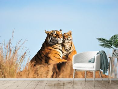 A mother tiger and her cub