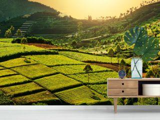 Field in Indonesia
