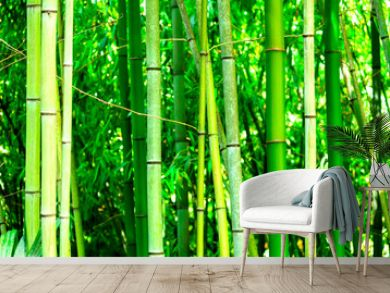 In a bamboo forest