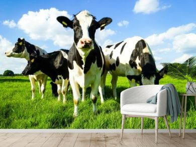 Um sich blickende Rinder