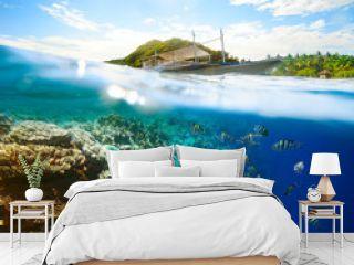 Beautiful underwater world on a sunny day at Apo Island. Philipp