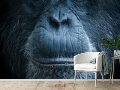Portrait de singe chimpanzé