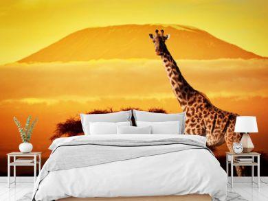 Giraffe on savanna. Mount Kilimanjaro at sunset. Safari