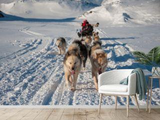 Dog sledding in Tasiilaq, East Greenland
